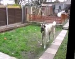 Собака встречает хозяина (3.037 MB)