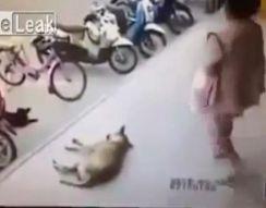 Не трогай собаку (2.197 MB)