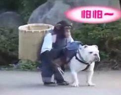 Обезьяна обманула пса (10.778 MB)