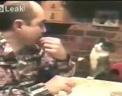 Кот хочет есть (2.741 MB)
