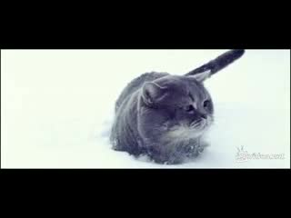 Котик на снегу (5.664 MB)