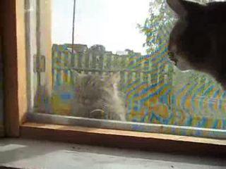 Беседа котов (4.684 MB)