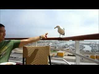Дерзские птички (570.531 KB)