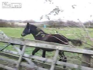 Конь неудачник (2.227 MB)