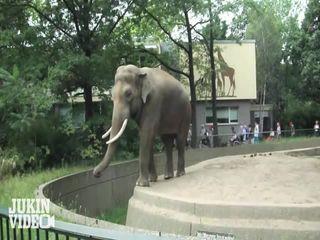 Слон спит (2.265 MB)