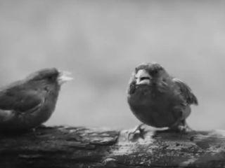 Птичий