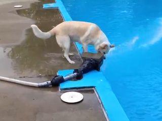 Собака и водомет (1.401 MB)