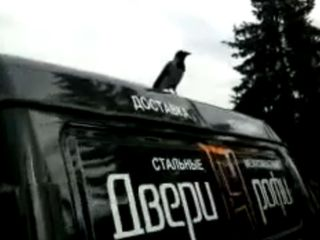 Ворона-петух (1.220 MB)