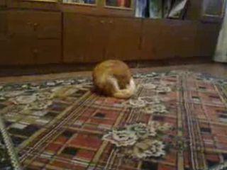 Кот бесится (1.946 MB)