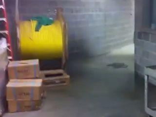 Странности из канализации (1.677 MB)