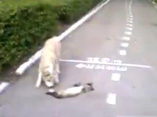 Кот притворился мертвым (3.348 MB)