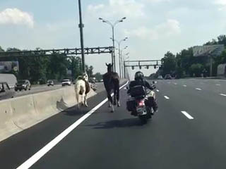 Лошади на МКАДе (6.007 MB)