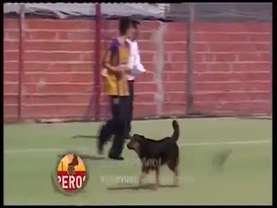 Собака-футболист