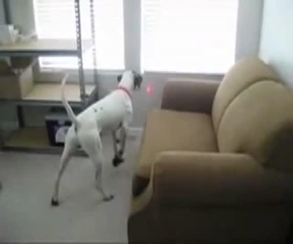 Простой способ занять вашу собаку (2.713 MB)
