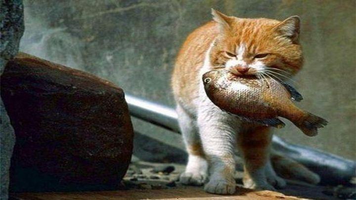 Кот-рыболов (4.903 MB)