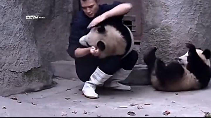 Панда отказывается от лекарств (10.372 MB)