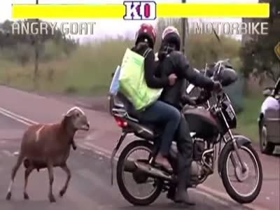 Коза атакует в стиле Street Fighter (6.380 MB)