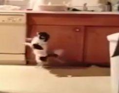 Собака-танцор