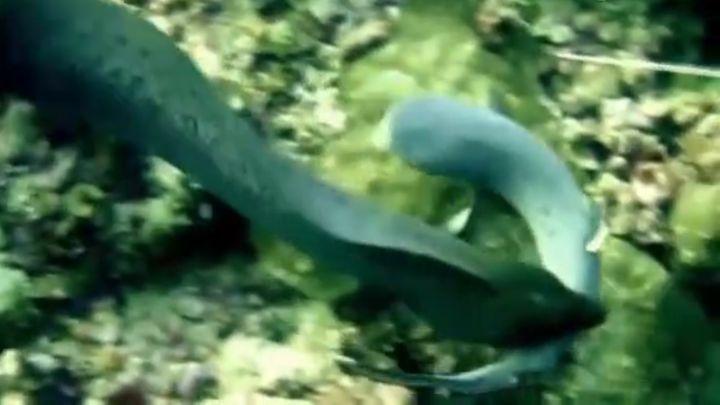 Акула против мурены (6.918 MB)