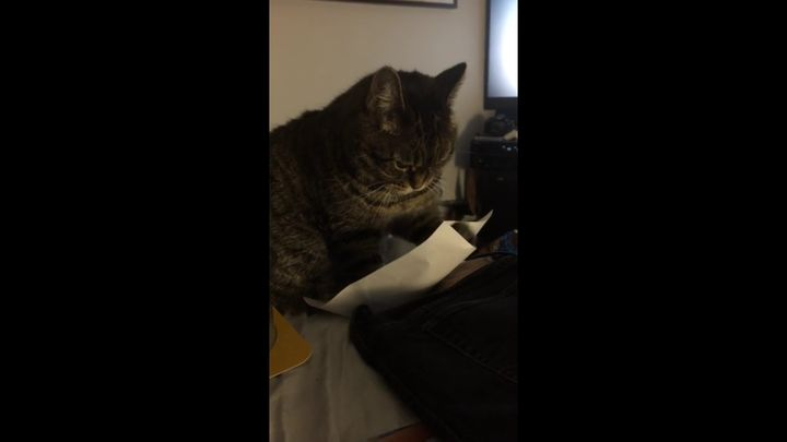 Коту очень весело (5.416 MB)
