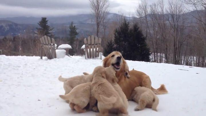 Счастливая мама с детишками (4.228 MB)
