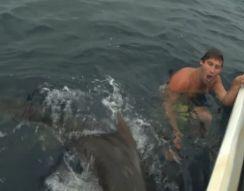 Акула напала на человека (10.605 MB)