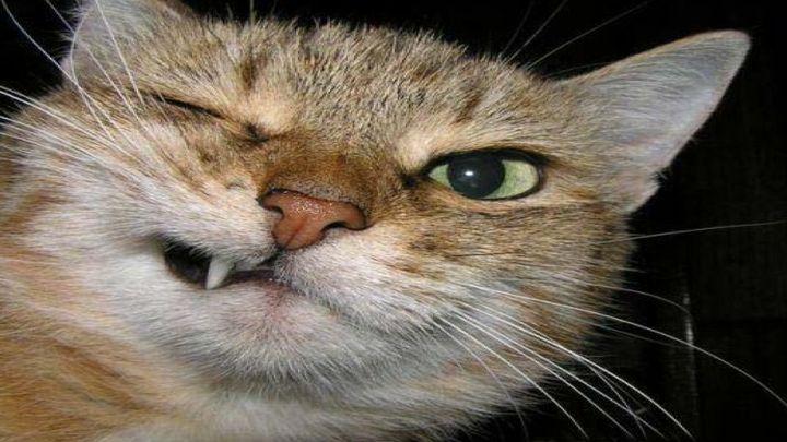 Кот выразил свое отношение к блюдам хозяина (1.445 MB)