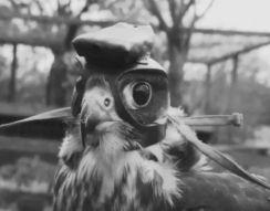 Соколиная охота от первого лица (8.878 MB)