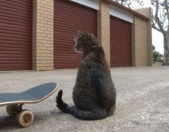 Кот-скейтбордист (8.909 MB)