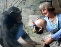 Малыш и обезьяна (2.178 MB)