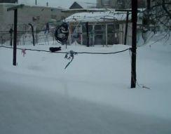 Кошка пробирается по снегу (4.302 MB)