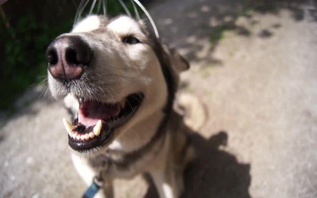 Собаке нравится массажер для головы (3.346 MB)