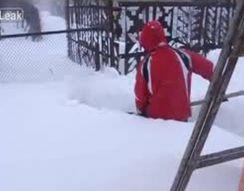 Поиск собаки в снежных сугробах (8.229 MB)