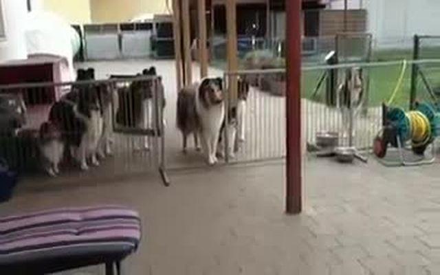 Обед культурных собак (3.572 MB)