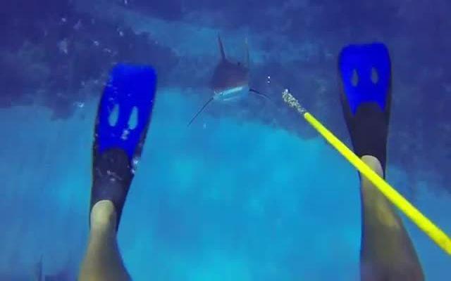 Неожиданное нападение акулы (12.770 MB)