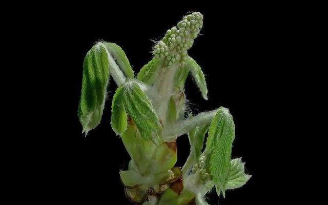 Ускоренный рост растений (9.517 MB)