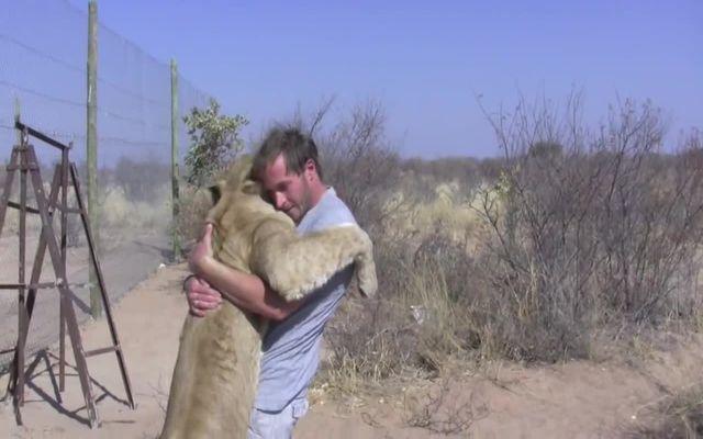 Дружба между человеком и львицей (12.679 MB)