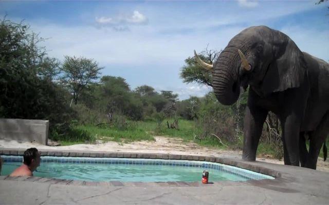 Слон зашел в гости (5.346 MB)