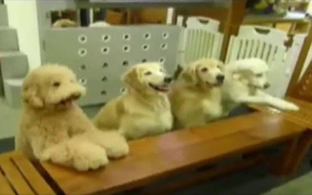 Обед воспитанных собак (6.644 MB)