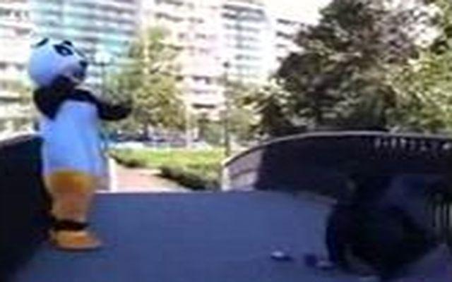 Панда - опасный зверь (2.540 MB)