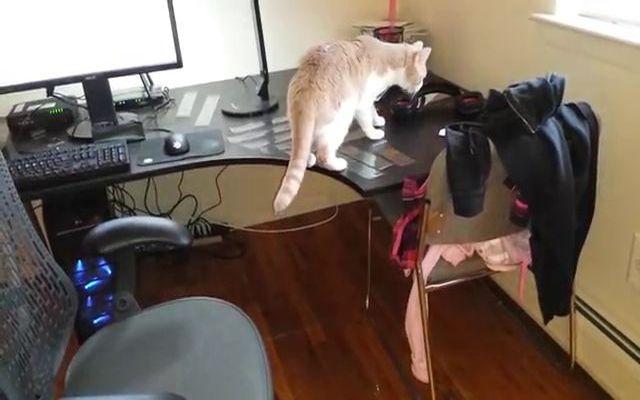 Отучаем кота ходить по столу (1.360 MB)