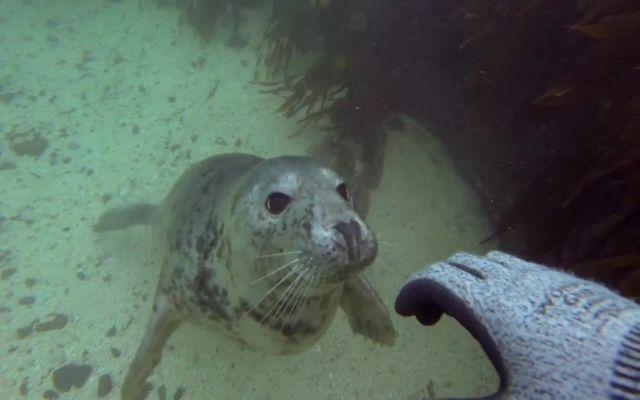 Общительные тюлени (5.533 MB)