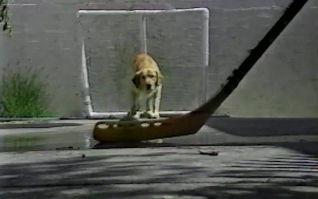 Собака-вратарь (4.137 MB)