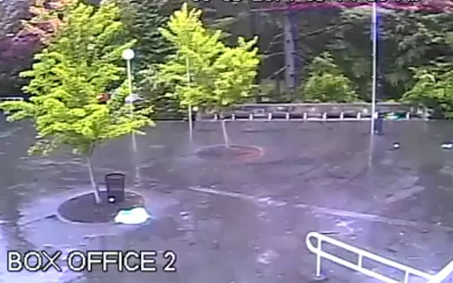 Молния уничтожила дерево (2.742 MB)