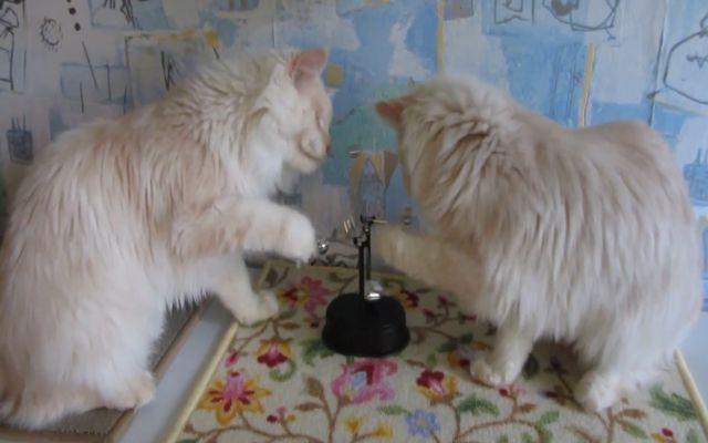 Котам нравится маятник (1.844 MB)