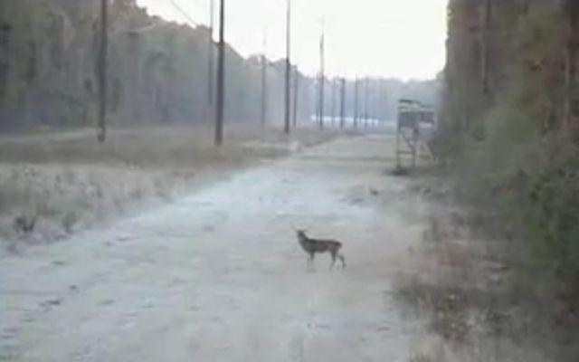 Криворукий охотник (1.140 MB)