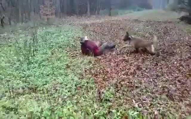 Собака сбила мужика с ног (1.065 MB)