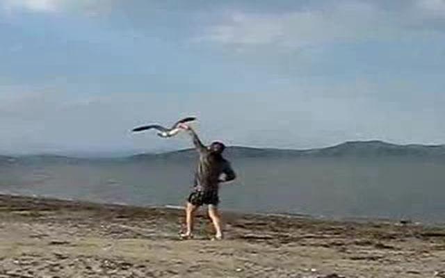 Поймал чайку за клюв (1.627 MB)
