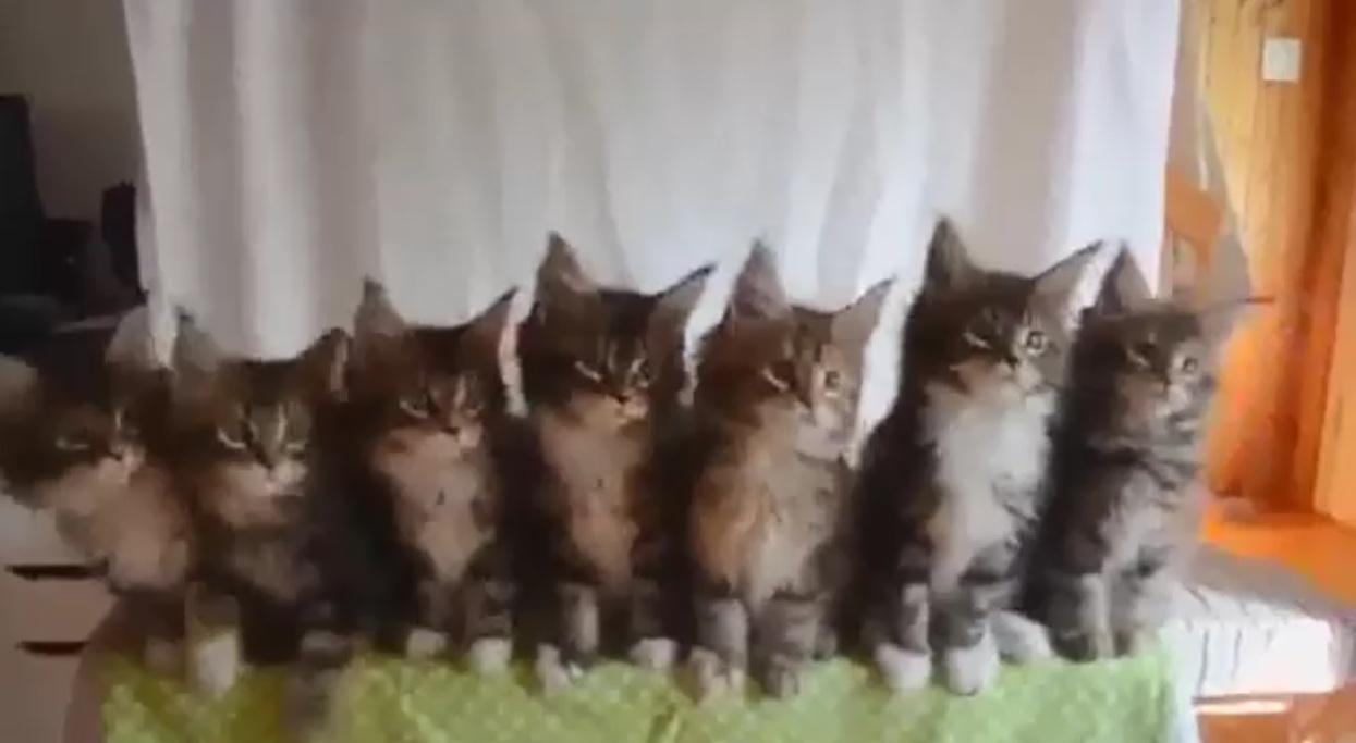 Синхронизация котят выполнена (4.287 MB)