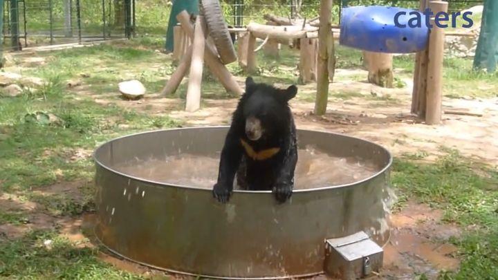 Довольный медведь купается в ванной (5.417 MB)